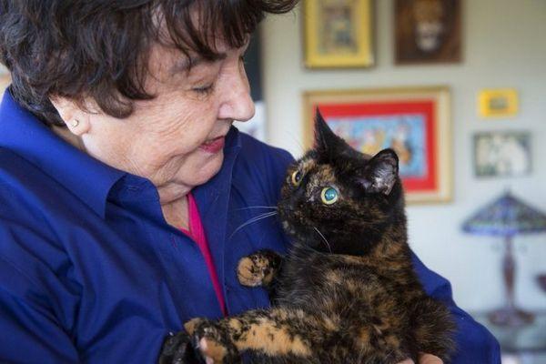 Tiffany dos, el gato vivo más viejo del mundo, muere a los 27 años