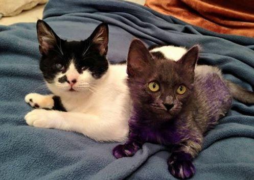 Dos gatitos abandonados encuentran amistad juntos