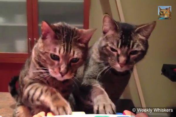 Dos gatos realizando un dúo increíble en el piano