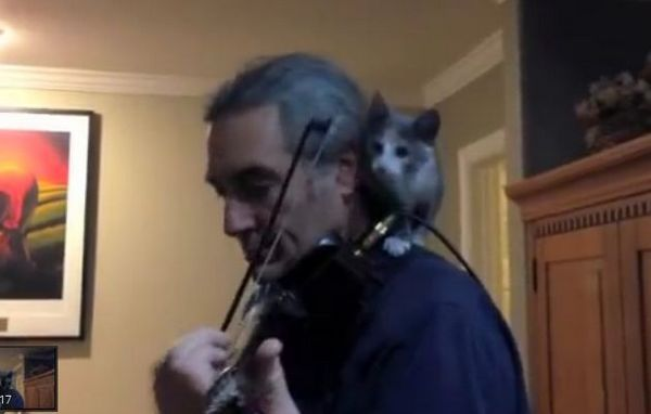 Mira a este gatito ayudar a su dueño a tocar el violín